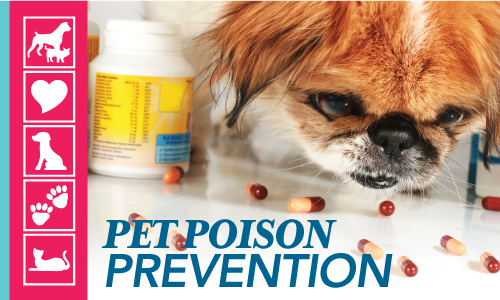 March is Pet Poison Prevention Month