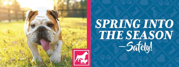 Spring into the Season—Safely!
