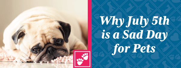 Why July 5th is A Sad Day for Pets