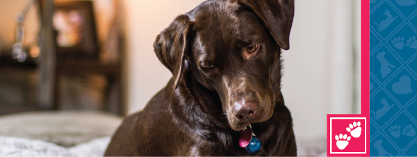 Would You Know if Your Pet Was in Pain?