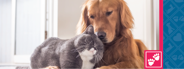 National Pet Insurance Month