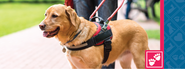 Shout Out to Service Dogs Everywhere!
